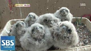 아기 황조롱이, 출생의 비밀 @TV동물농장 140907