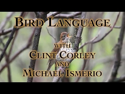 Bird Language with Clint Corley and Michael Ismerio Part 1