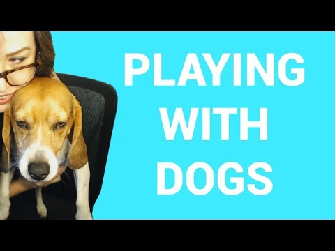 Playing With My Dog | Twitch Clips of the Week #91