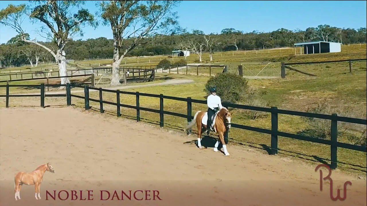 Sport Horse Films Australia | STALLION VIDEO | Noble Dancer