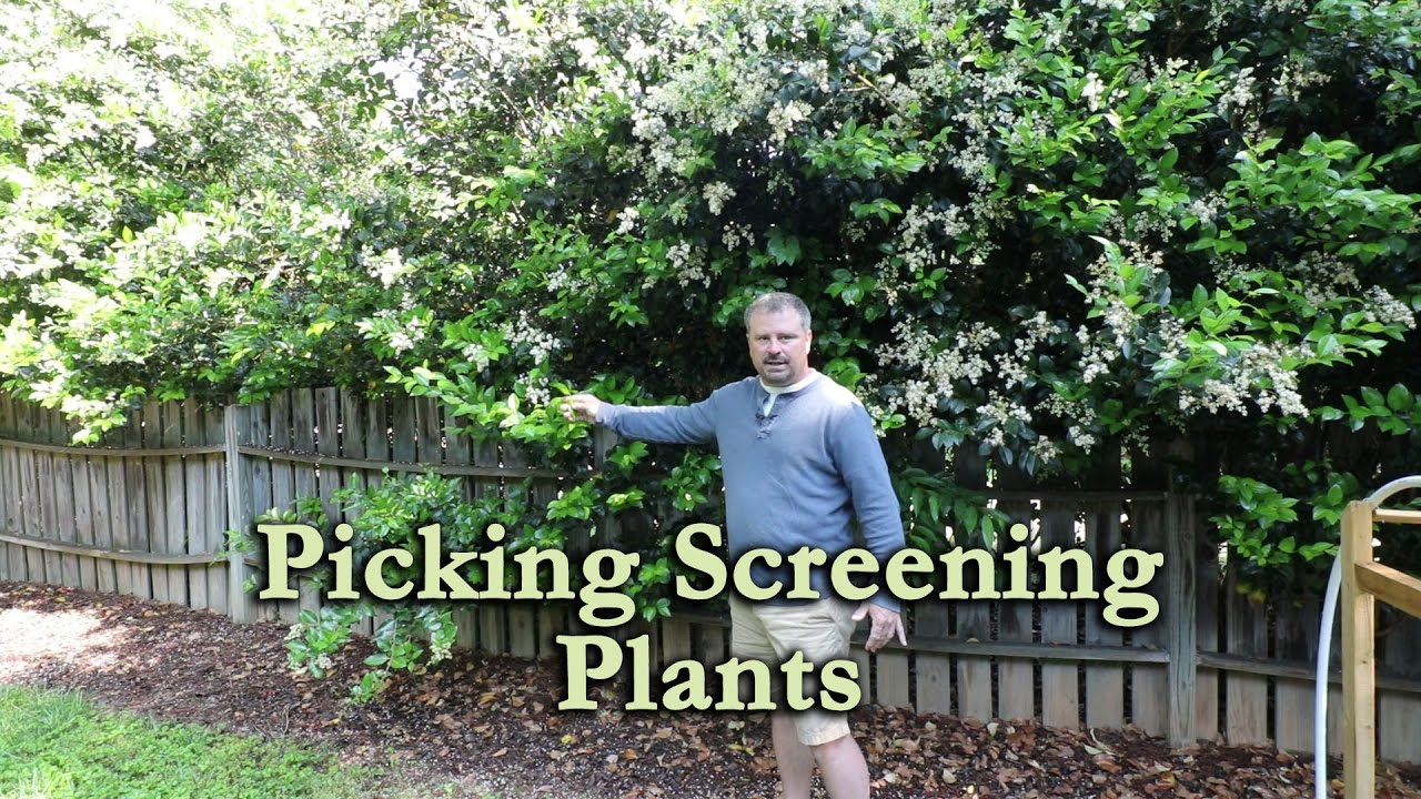how to use a mix of screening plants to make your neighbor go away