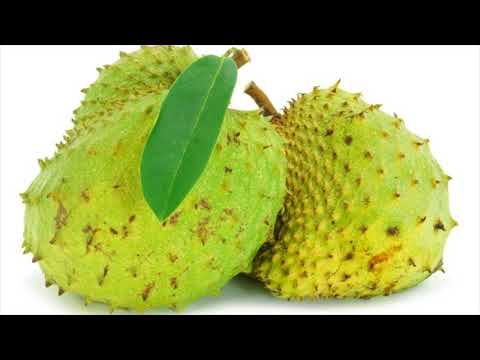 Boosts The Immune System Naturally With Soursop- Health Benefits Of Soursop