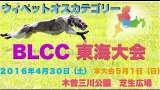 2016年5月1日 BLCC 東海大会 ウィペットオスカテゴリー BLCCルア...