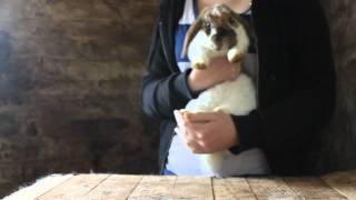 Kaninchen richtig hochnehmen