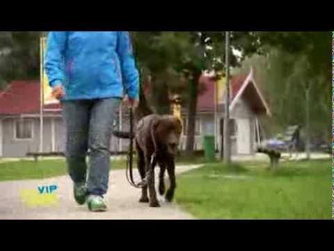 vip hundeprofi