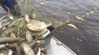 Рыбалка на Иртыше 2015(, 2015-11-14T07:20:18.000Z)