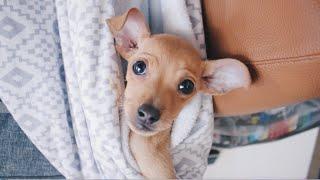 うちでフォスターしていた保護犬のアリエルは、3月17日に4ヶ月とい...