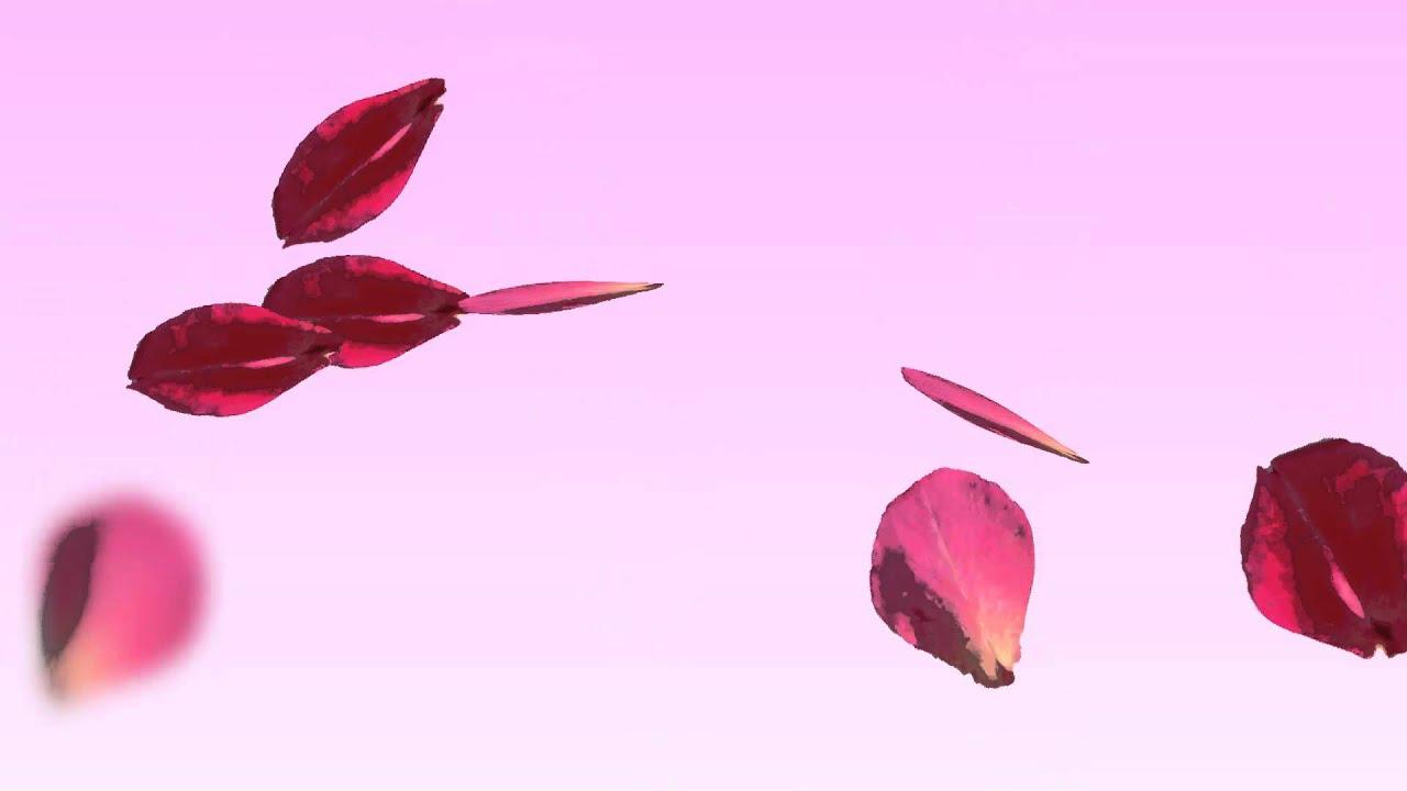 rose petals falling animation