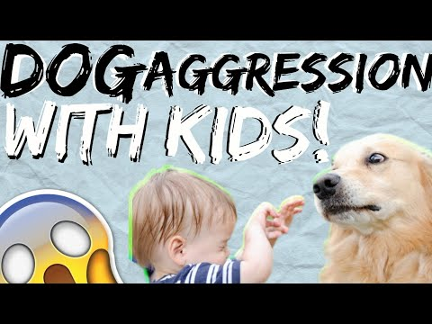 My dog doesn't like kids- Why is my dog aggressive towards kids?