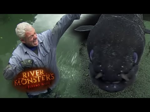 Swimming With Wild Bloodthirsty Eels - River Monsters