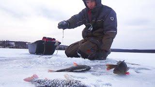 КЛЁВ ХИТРЫХ ЩУК И ОКУНЕЙ ПО ПЕРВОМУ ЛЬДУ Рыбалка подводные кадры и первые потери