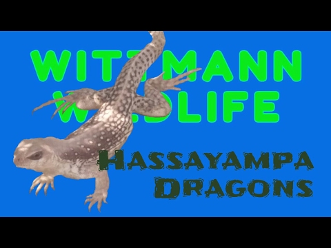 Wittmann Wildlife - Hassayampa Dragons