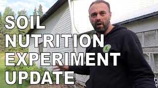 Permaculture gardening, improving  soil nutrition experiment- Update September 1, 2020