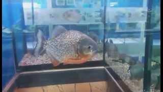 Морской аквариум на Чистых прудах(, 2015-02-12T12:07:25.000Z)