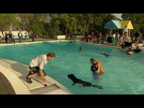 Before this public pool is drained at the end of summer, there is a day where dogs get to swim in it