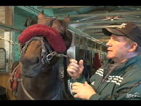 Tips Of The Trade - Fitting The Shadow Roll --USTA Harness Racing Hoof Beats