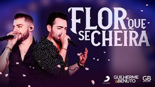Baixar Guilherme e Benuto - Flor Que Se Cheira (DVD AMANDO, BEBENDO E SOFRENDO)