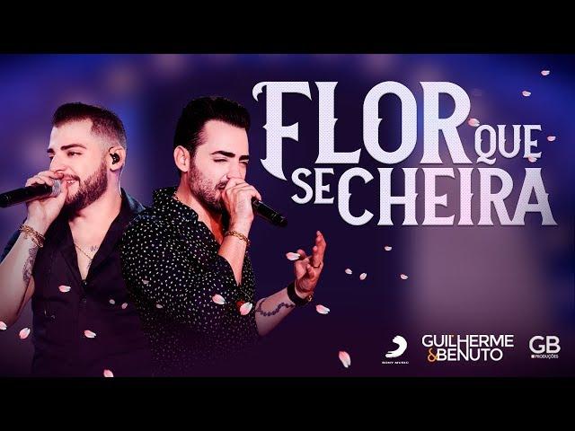 Guilherme e Benuto - Flor Que Se Cheira (DVD AMANDO, BEBENDO E SOFRENDO)
