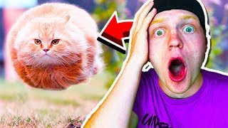 50 INSANE PERFECTLY TIMED PHOTOS! (REACT)