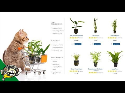 Where to buy Aquarium Plants Online?