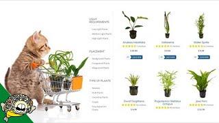 Where to buy Aquarium Plants Online? thumbnail