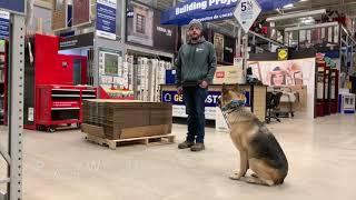 Best Dog Training Toledo, Ohio! 2 Year Old Reactive German Shepherd, Ella!