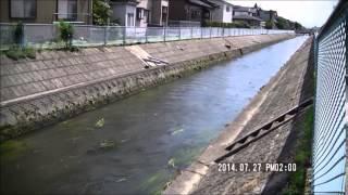 用水や河川を刈草が流れる状況(用水や河川に刈草を流さないようご協力をお願いします)