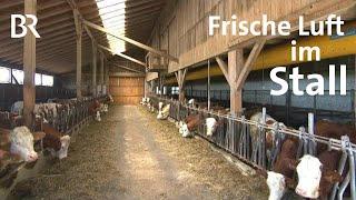 Richtige Stallbelüftung: Frischluft im Stall - gesunde Kälber   Unser Land   BR Fernsehen