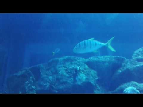 Un Aquarium à dubai mall Emirates