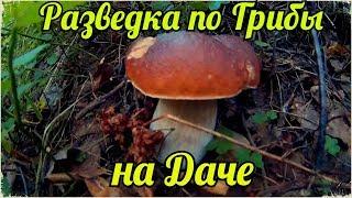 Разведка по Грибы, на даче в Сентябре | Рядом с участком, растут даже Белые грибы | Mushrooms