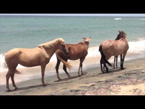 "Jimi Hendrix ""Pali Gap"" - Horses wild & free"