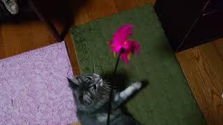 東京都でメインクーンの子猫のブリーダーをしている、メインクーンキャッテリー東京オノクーンです。メインクーンの子猫を飼ってみたい方の...