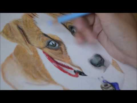 how-to-draw-a-realistic-dog-in-colored-pencil