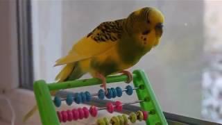 Говорящий попугай Кеша разговаривает Видео для детей