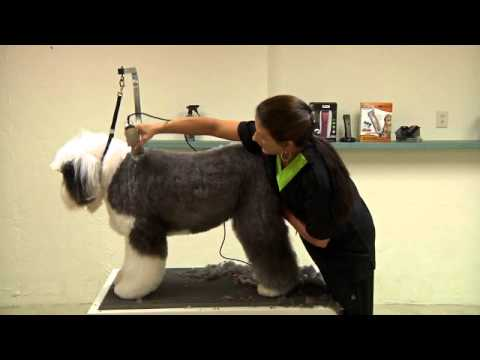 Grooming an Old English Sheepdog using a Wahl KM2 Deluxe with Sue Zecco