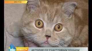 Чудесное спасение кота Тобика после пожара в иркутской зоогалерее