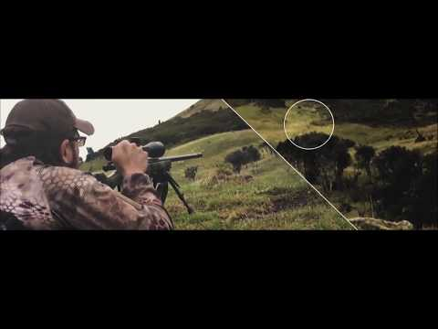 Nitro & Forge in New Zealand Hunting Stag