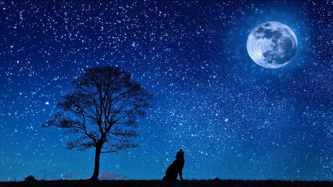 Sonidos de la Naturaleza para Dormir - Sonidos Relajantes para Dormir Profundamente - Sonido Grillos