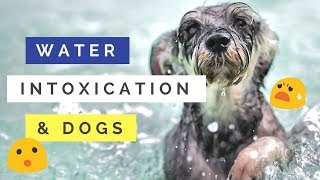 Dogs and Water Intoxication
