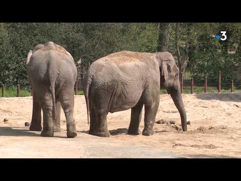 Les animaux du Zoo de La Palmyre face au coronavirus