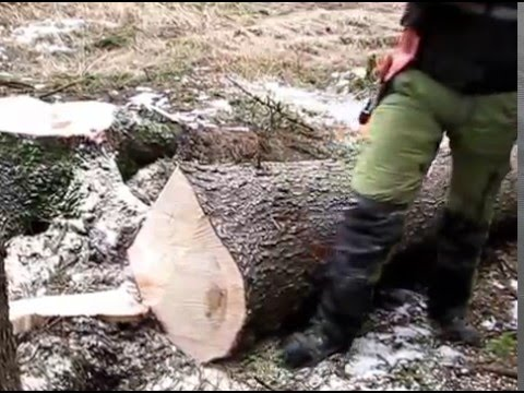 Measuring and marking wood in the forest - YouTube