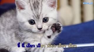[คาราโอเกะ off vocal] เพลง เหมียวเหมียวในแอป TikTok ชื่อเพลง 学猫叫
