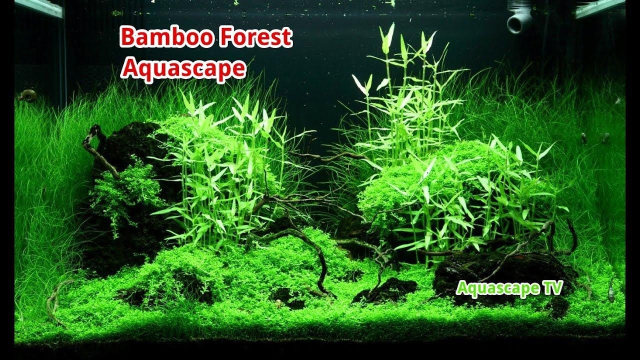 Bamboo Forest Aquascape Asian Style | Aquascape TV