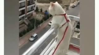Hayvanlar alemi komik videolar instagram 2020 yeni