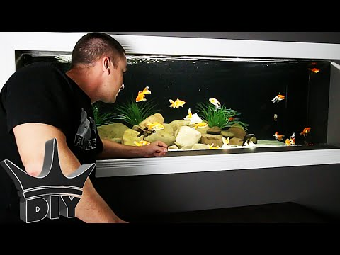 My HUGE goldfish aquarium UPDATE!