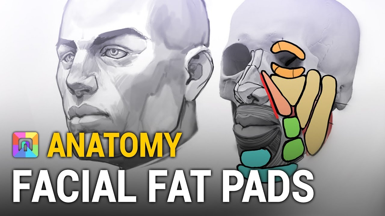 Download Anatomy Secrets - Facial Fat Pads (ART School)