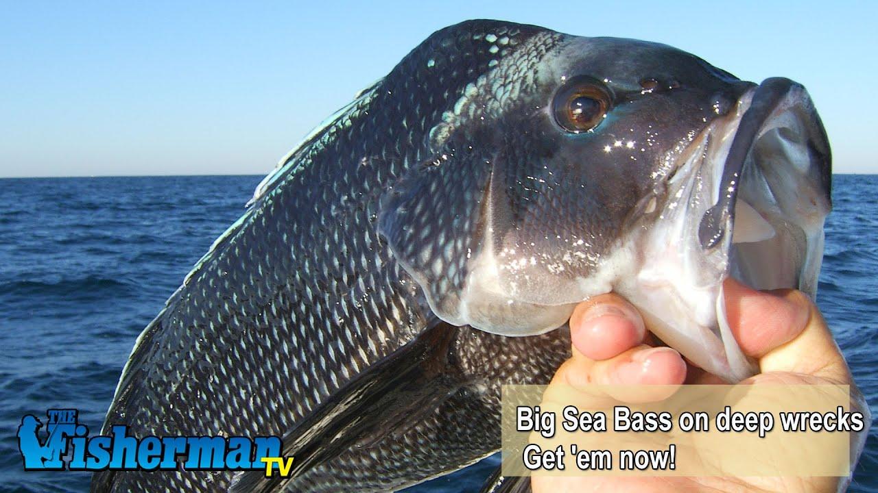 December 8 2014 new jersey delaware bay fishing report for Barnegat bay fishing report