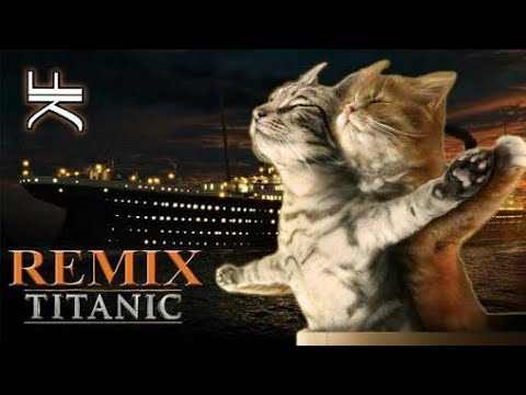 Cats Singing Song | Titanic - My Heart Will Go On
