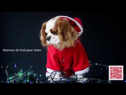 Collection De Noël Pour Chien Et Chat