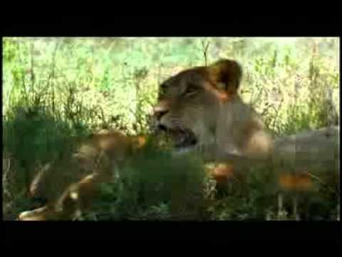Kenya Safari Guide, Kenya General Information, Kenya Safari Tours, Kenya Safari